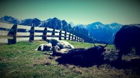 South Tirol